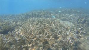 163Underwater_Maldives