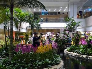 Сингапур орхидеите са техните мушкати
